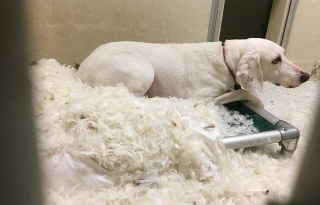 Σκύλος κτηνίατροι