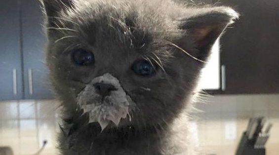 19 Υπέροχες Φωτογραφίες με Μικροσκοπικά Γατάκια που θα σας Κλέψουν την Καρδιά! Πραγματικά Αξιολάτρευτα!
