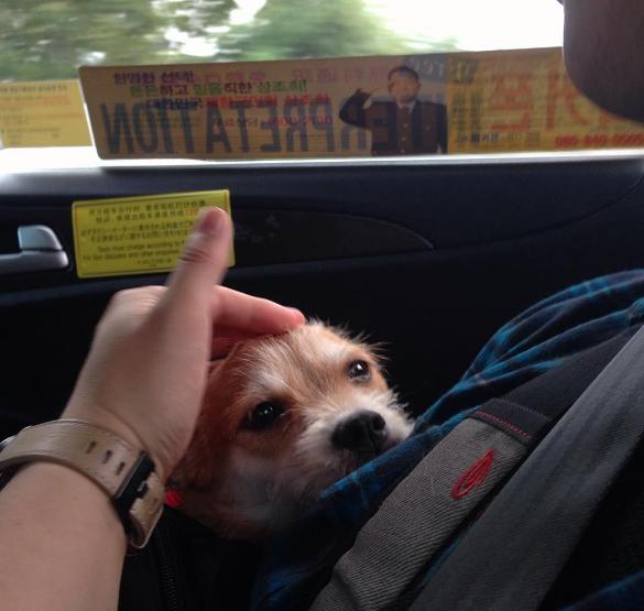υιοθεσία αδέσποτων Αδέσποτος σκύλος