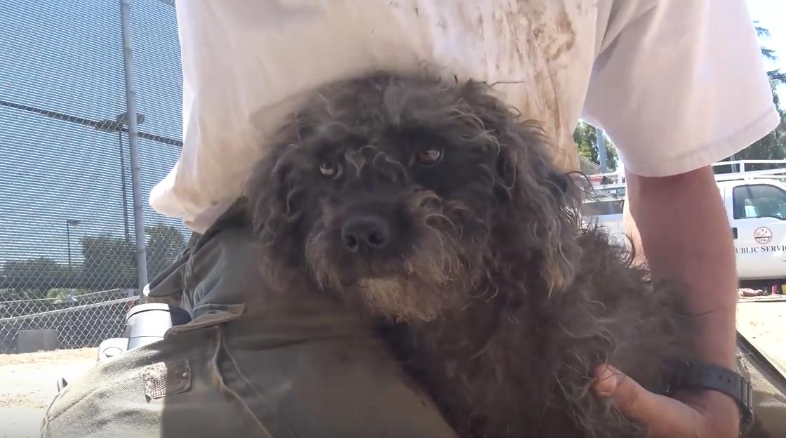 Σκύλος σκύλοι Βίντεο αυτοκίνητο