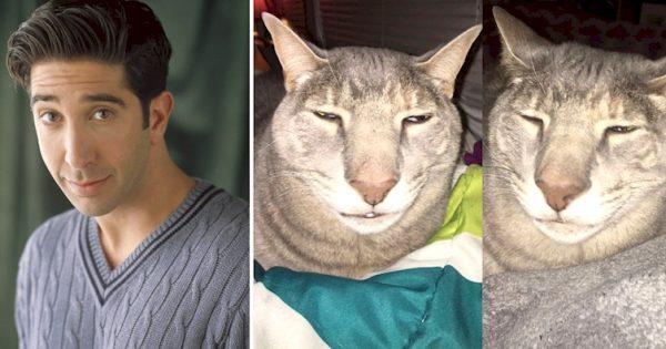 """ΑΠΙΣΤΕΥΤΟ..!! Αυτός ο Γάτος που Μοιάζει με τον Ρος από τα Φιλαράκια έχει """"Ρίξει"""" το διαδίκτυο! Εσάς σας τον Θυμίζει;"""