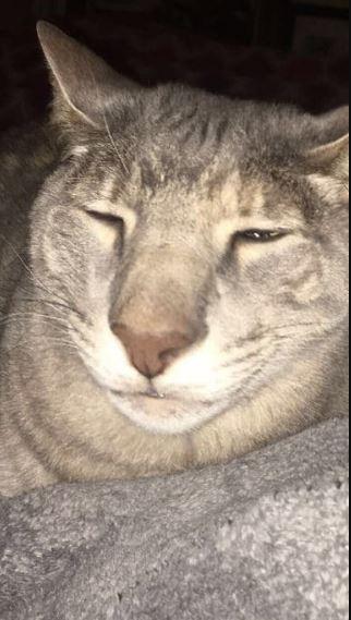 Γάτα Ross Geller