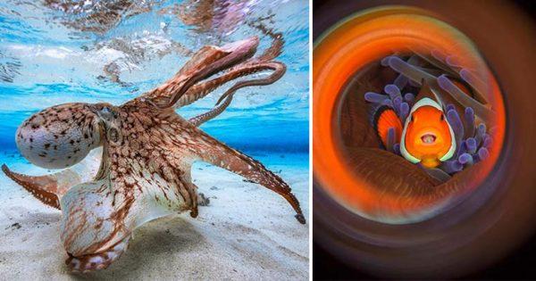 32 από τις καλύτερες και βραβευμένες υποβρύχιες φωτογραφίες της χρονιάς