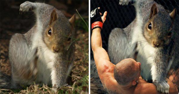 Αυτός ο σκίουρος πόζαρε έτσι και προκάλεσε την πιο διασκεδαστική μάχη του Photoshop
