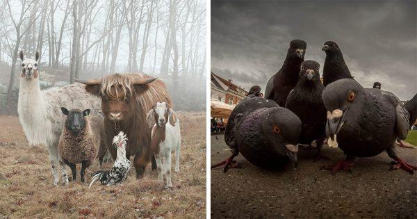40 φωτογραφίες ζώων που μοιάζουν με εξώφυλλα άλμπουμ μουσικής