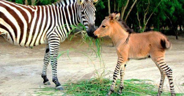 18 Απίστευτα Ζώα που Όντως Υπάρχουν! Με το 9… Θα Τρίβετε τα Μάτια σας!