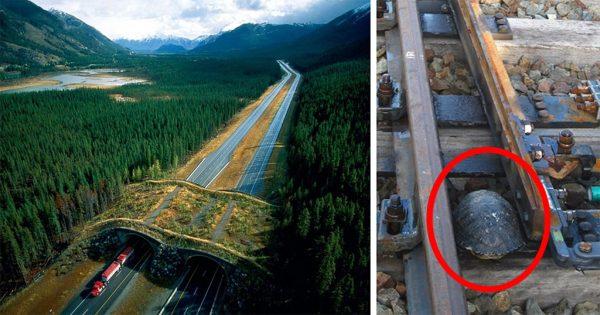 50 γέφυρες και διαβάσεις για ζώα που σώζουν χιλιάδες ζωές ζώων κάθε χρόνο