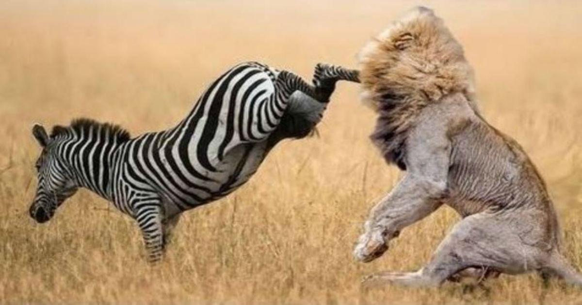 μάζες θήραμα ζώα Βίντεο