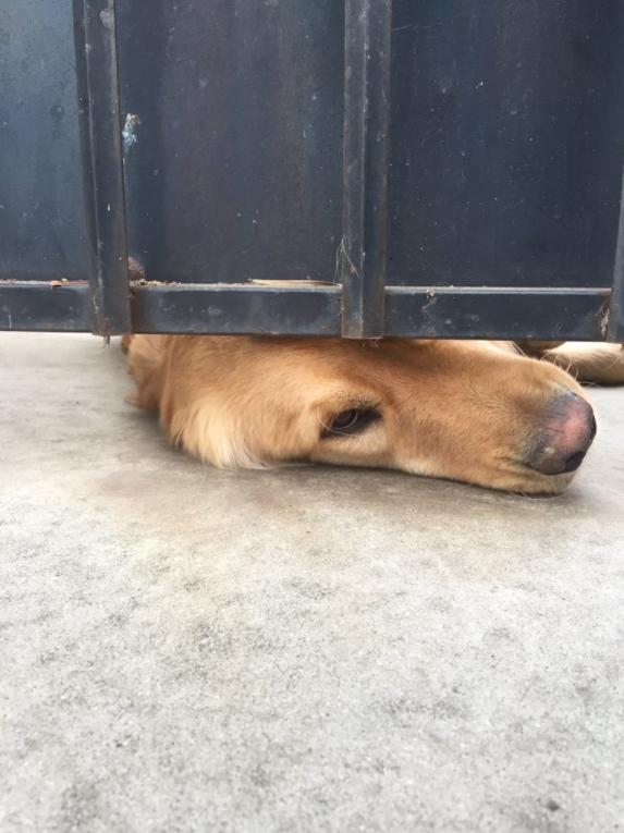 Σκύλος μουσούδα