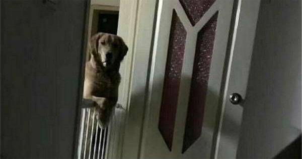 Ιδιοκτήτης μαθαίνει τον λυπηρό λόγο που ο σκύλος του τον κοιτά πριν αυτός κοιμηθεί