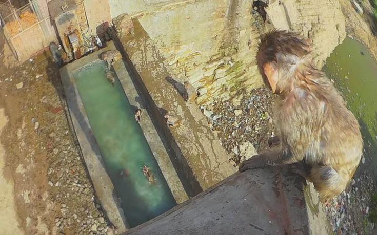 πιθηκάκι Βίντεο