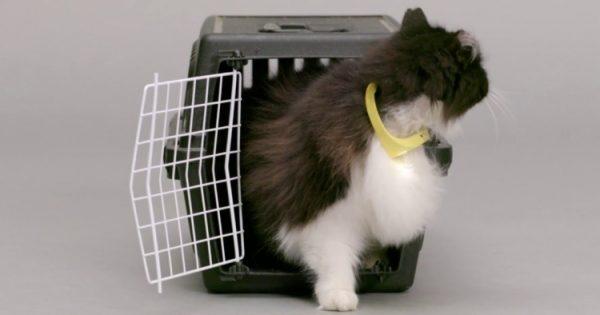 Βίντεο: Το χάι τεκ κολάρο που κάνει τη γάτα σου να «μιλάει»