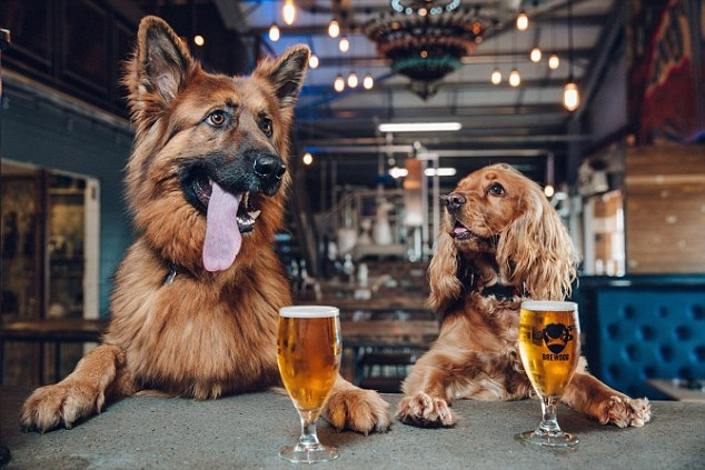 dogbeer1