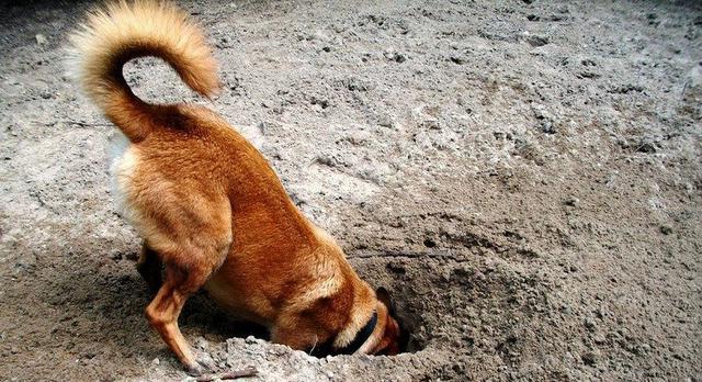 τρύπες Σκύλος κήπος