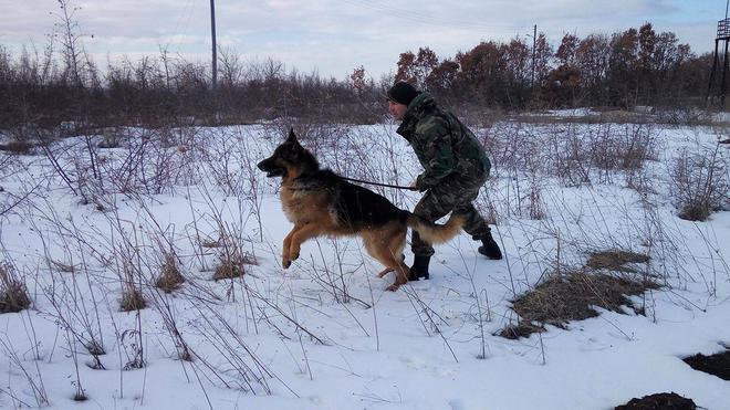 χιόνι Σκύλος εκπαίδευση