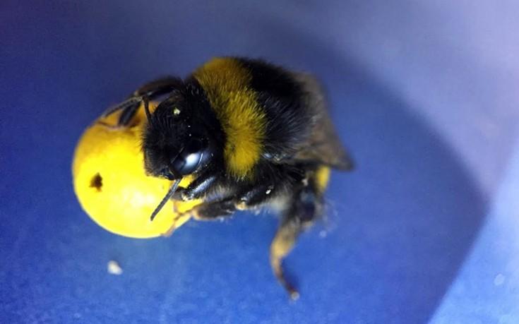 ποδόσφαιρο μέλισσες
