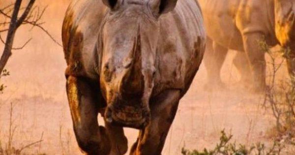 Τα 18 πιο επικίνδυνα ζώα του κόσμου! (φωτό)