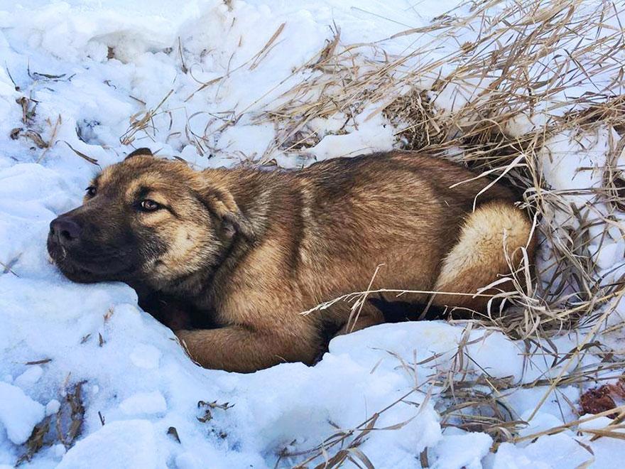 χιόνι Σκύλος διάσωση σκύλου