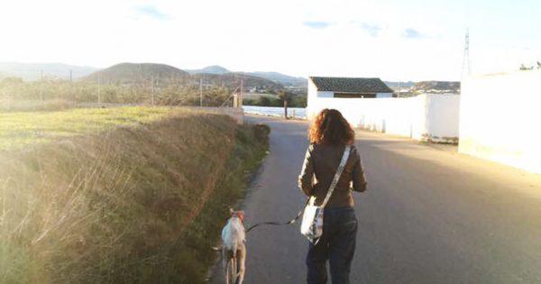 Σκυλίτσα με σπασμένο πόδι οδηγεί κτηνίατρο επί 3 χιλιόμετρα για να σώσουν τα κουτάβια της