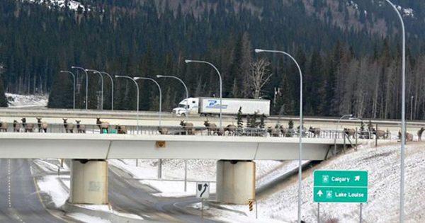 10 γέφυρες και διαβάσεις που σώζουν τις ζωές χιλιάδων ζώων