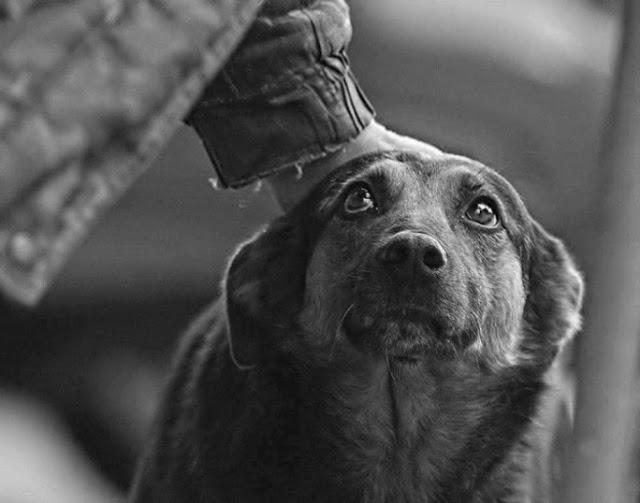 εγκατάλειψη ζώων Paulo Coelho