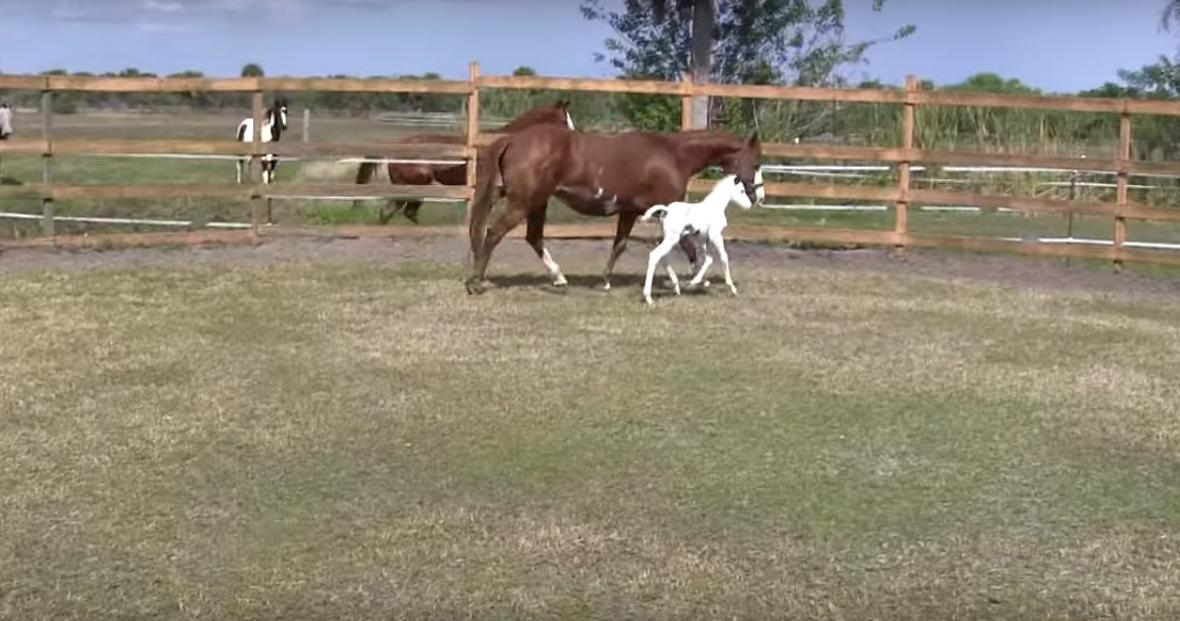 φοράδα άλογο άλογα