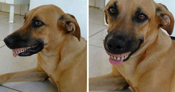 Ιδιοκτήτης πέθανε από τα γέλια όταν έμαθε ότι ο σκύλος του «απέκτησε» τα νέα δόντια του