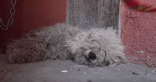 Αυτό το αδέσποτο σκυλί είχε πάψει να ελπίζει – μέχρι που γνώρισε ένα μικρό αγόρι