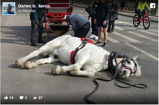 κακοποίηση ζώων άλογα
