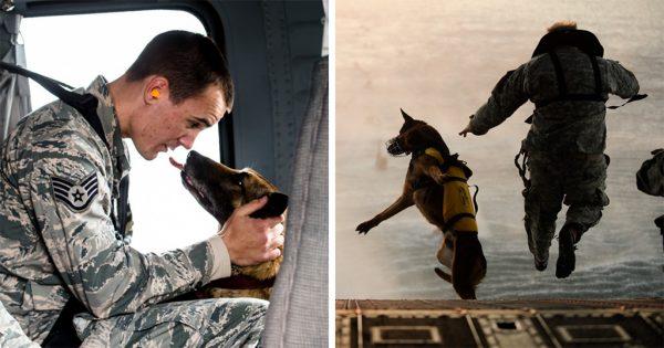 40 δυνατές φωτογραφίες με σκύλους στην υπηρεσία του ανθρώπου