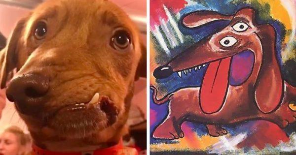 Γνωρίστε τον Picasso, τον σκύλο με την ασυνήθιστη φάτσα που δεν ήθελε κανείς