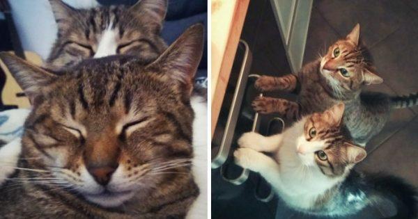 Γάτα φροντίζει μια αδέσποτη γατούλα και αυτή δείχνει την ευγνωμοσύνη της με τον καλύτερο τρόπο