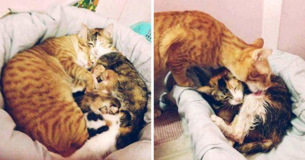 Συγκλονιστικό! Αρσενικός Γάτος φροντίζει Θηλυκή Γάτα την ώρα που Γεννάει και μας δείχνει πως Πρέπει να είναι ο Ιδανικός σύζυγος