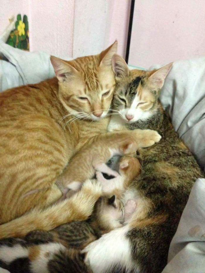 γέννα γάτος Γάτα