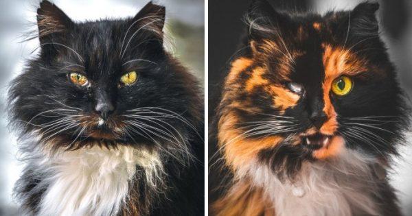 Πορτραίτα αδέσποτων γατών από έναν Λιθουανό φωτογράφο
