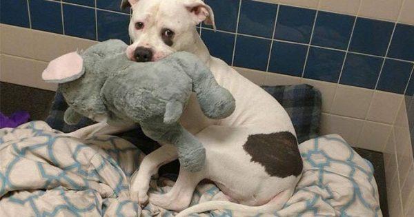 Λυπημένος σκύλος που ζει σε καταφύγιο με μαθαίνει ότι βρήκε νέο σπίτι