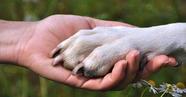 Ξέρετε γιατί ένας σκύλος δεν φεύγει ποτέ από το πλευρό του ιδιοκτήτη του, ακόμη και μετά το θάνατο του;
