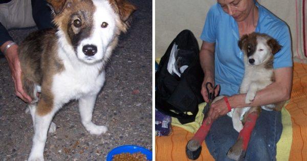 Τραυματισμένο αδέσποτο κουτάβι επιβιώνει και ξεκινάει μια νέα ζωή