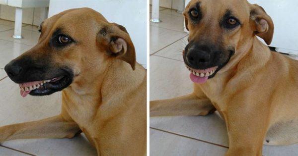 Ιδιοκτήτης σκύλου βρίσκει την σκυλίτσα του με ένα 'νέο' χαμόγελο και ξεκαρδίζεται στα γέλια