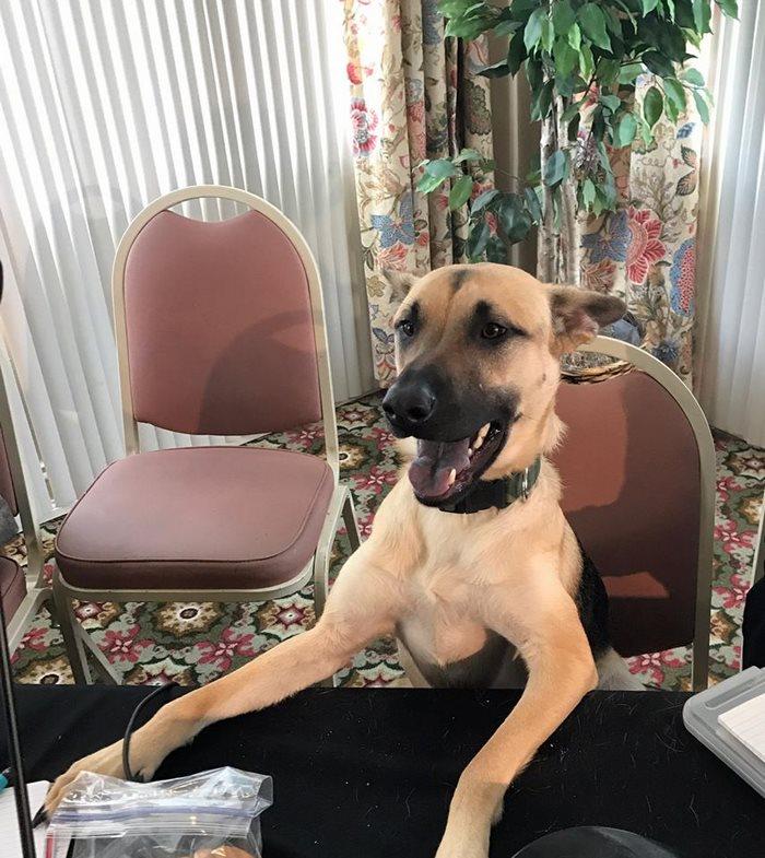υιοθεσία αδέσποτων σκυλίτσα πυροσβέστης