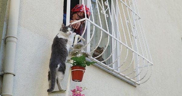 Αυτή η γυναίκα έφτιαξε μια σκάλα για γάτες ώστε να μπορούν να μπαίνουν στο σπίτι της όταν έχει κρύο