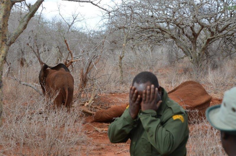 λαθροκυνηγοί ελεφαντάκι Βίντεο