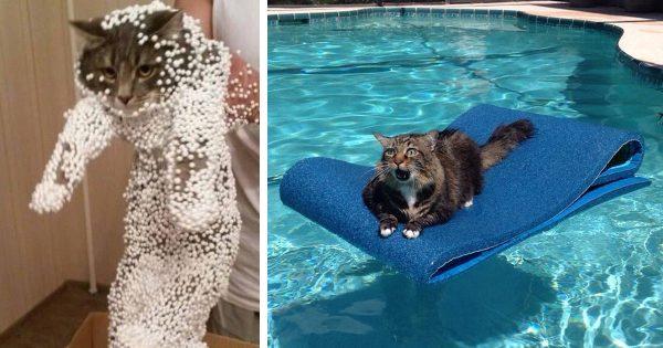 50 γάτες που πήραν πολύ κακές αποφάσεις…