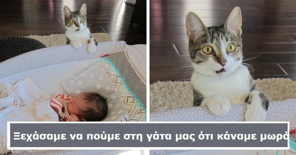 20 Ιδιοκτήτες Ζώων που έκαναν Τρελές εκπλήξεις στα Κατοικίδιά τους. Δείτε τις Ξεκαρδιστικές Αντιδράσεις τους!