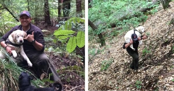 Η συγκλονιστική ιστορία ενός τυφλού σκύλου που χάθηκε για 7 ημέρες στο βουνό και σώθηκε με τον πιο απίστευτο τρόπο!