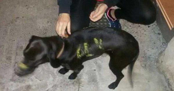 Υιοθετήθηκε ο σκύλος που τον είχαν βάψει με τα χρώματα της ΑΕΚ