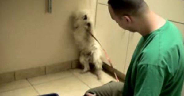 Τον πήγαν για ευθανασία, αλλά αυτός ο άντρας τους σταμάτησε την τελευταία στιγμή. Προσέξτε τώρα ΠΩΣ αντιδράει ο σκύλος!