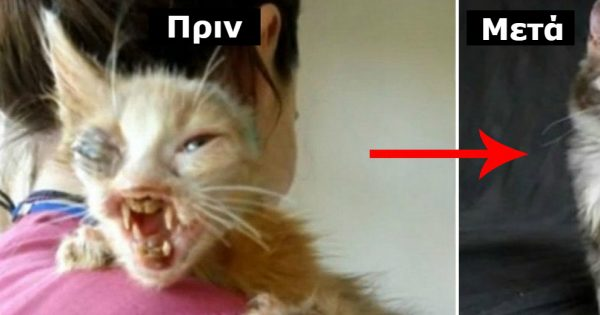 Κανείς δεν ήθελε αυτό το γατάκι λόγω της εμφάνισής του. Η απίστευτη μεταμόρφωσή του μετά την υιοθεσία του θα σας αφήσει άφωνους!