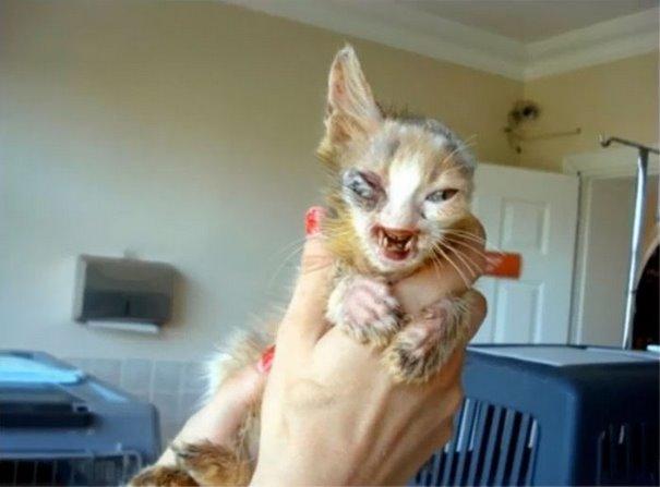 υιοθεσία γάτας γατάκι