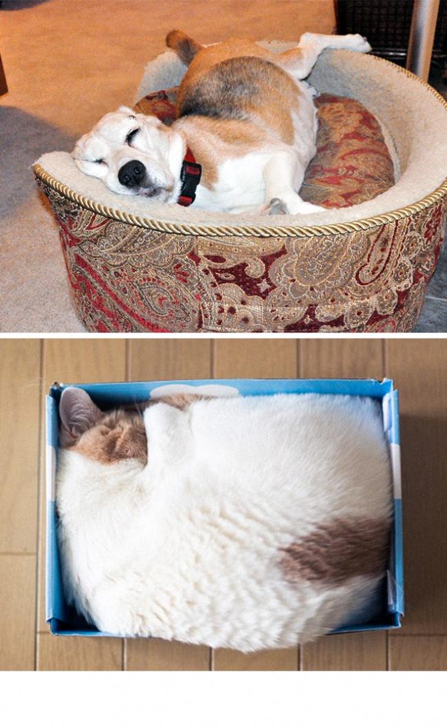 σκύλοι γάτες